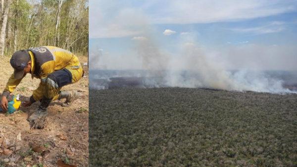 Požáry v Amazonii zlikvidovaly během srpna pralesy o rozloze 4,2 milionu fotbalových hřišť