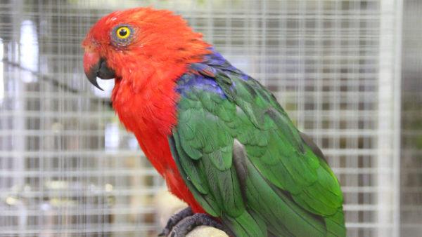 Přehled ptačích burz a výstav pro víkend 20. až 22. září 2019