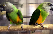Přehled ptačích burz a výstav pro víkend 6. až 8. září 2019