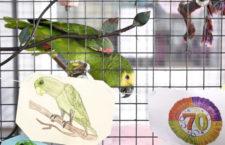 Škola uspořádá narozeninovou party pro svého 70-letého papouška