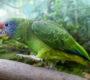 Jaké druhy papoušků a dalších ptáků chová pražská zoo v Rákosově pavilonu?