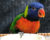 Přehled ptačích burz a výstav pro víkend 18. až 20. října 2019
