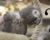 Otestujte se: Jak dobře znáte papoušky?