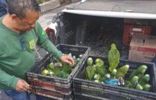 Brazilci přestanou zabavovat nelegálně chované ochočené papoušky, pokud jsou v domácnosti osm a více let