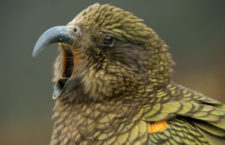 Kvíz: 10 otázek pro pokročilé znalce papoušků. Zvládnete je?