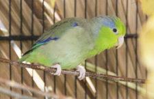 Přehled ptačích burz a výstav pro víkend 1. až 3. listopadu 2019