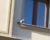 Chronický útěkář kakadu růžový opět létá na pražské Podbabě. Domluva majiteli nepomohla