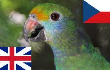 Brexit zatím nemění podmínky dovozu a vývozu papoušků CITES z Británie do Česka, od roku 2021 tomu bude jinak