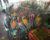 Zátah na dálnici v Izraeli: zloději převáželi ve dvou autech 65 kradených papoušků ara a kakadu