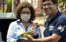 Arové hnízdí už i v paraguayských městech. Ochránci očipovali mládě křížence ve městě Luque