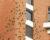 Aratingové kropenatí v Sao Paulu olizují cement mezi cihlami, podobně jako arové jíly v Amazonii