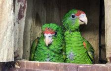 Rekordní léto v Papouščí zoo Bošovice: 50 % nárůst návštěvníků oproti loňsku a čtyři prvoodchovy