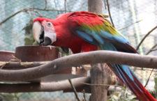 Přehled ptačích burz a výstav pro víkend 21. až 23. srpna 2020