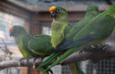 Přehled ptačích burz a výstav pro víkend 28. až 30. srpna 2020