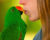 Líbání s papoušky není zrovna moc dobrý nápad, varují veterináři