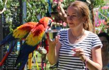 """Letošní sraz papouškářů na Krásném u Šumperka se nesl v duchu """"volnoletci sobě"""""""