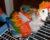 Zveřejňujte jména chovatelů, kteří prodávají nedokrmená mláďata papoušků!