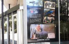 Vzácné papoušky z Rákosova pavilonu a další zvířata z pražské zoo je možné sledovat v 8K rozlišení