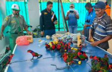 Indonésie opět řeší případ papoušků pašovaných v plastových lahvích. Tentokrát jde o lorie
