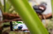 Zvířata z pražské zoo v ultravysokém rozlišení 8K: první profi video s rozlišením 33,2 megapixelů