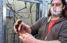 Pražská zoo získala z Walsrode vzácné rajky volavé. Zatím je ale neuvidíte, zůstanou v zázemí