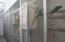 Karanténovat nové ptáky nebo nekaranténovat? A dělat nové testy na nemoci a pohlaví nebo ne?