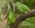 Příběhy ohrožených papoušků z Červené knihy IUCN 2020: amazoňan šedohlavý