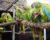 Příběhy ohrožených papoušků z Červené knihy IUCN 2020: ara zelený