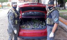 Pašeráci v Argentině se ani neobtěžovali s bednami: 216 mláďat amazoňanů vezli jen tak v kufru auta