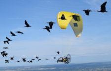 Ochráncům se daří do Alp vracet ibisy skalní. Bohužel je střílí lovci v italském zimovišti