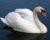 Ptačí chřipka je už na okraji Prahy, měla ji uhynulá labuť v Květnici u Úval