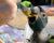 Košické zoo se podařilo odchovat aru horského, mládě dokrmila ručně