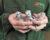 Papouščí zoo Bošovice má letos mláďata už od 12 druhů papoušků, ale také finanční problémy