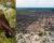 Lesníci v Západní Austrálii žádají vládu, aby povolila zalesnit vytěžené oblasti a zachránila tak kakaduy bělouché