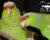Ostravská zoo se pustila do chovu amazoňanů fialovotemenných, má je jako jediná zahrada v Česku