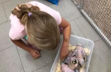 Jsou ručně odchovaní papoušci použitelní v chovu? Kéž by to bylo tak jednoduché