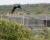 Loro Parque vypustil v Brazílii další dva ary kobaltové do přírody. Doplnili šestici z roku 2019
