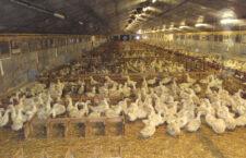 Česko má už 23 ohnisek ptačí chřipky, jen tento týden jich přibylo pět: ve středních a východních Čechách