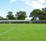 Rekonstrukci fotbalového hřiště má padnout za oběť hnízdiště kakaduů bělouchých