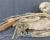 Jak se dostali arové arakanga do chilské pouště Atacama? Ptačí mumie se zachovaly z dob před Inky