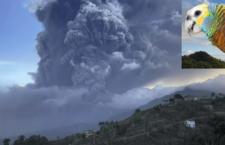 Amazoňany ohnivé na Svatém Vincentu ohrožuje vybuchlá sopka, povrch ostrova pokryl popel