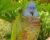 Uhynul Gabriel, poslední amazoňan mnohobarvý ze záchranného chovu Zoo Jersey. Dožil se 45 let