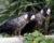Šťastné shledání: ochrnutý kakadu se po vyléčení sám vrátil do míst, kde ho zachránili
