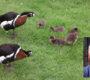 10x o okrasných vodních ptácích s chovatelem Jaroslavem Němcem