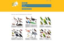 Vznikl celoevropský web pro monitoring výskytu nepůvodních druhů ptáků, včetně papoušků