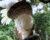 Australan zachytil, jak třímetrová krajta ulovila a sežrala celého kakadua žlutočečelatého