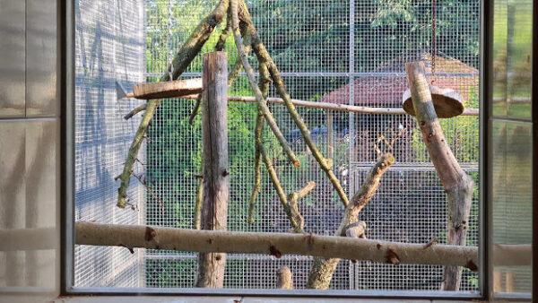 Vertikální bidla papoušci milují. Nebojte se jim je nabídnout