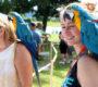 Komornější devátý ročník Papouščího dne na Krásném u Šumperka přilákal 2000 návštěvníků