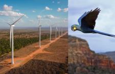 V biotopu arů kobaltových postaví desítky větrných elektráren. Ochránci se obávají střetu ptáků s turbínami
