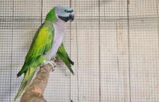 Přehled ptačích burz a výstav pro víkend 1. až 3. října 2021